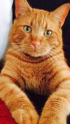 Everything about this unimpressed orange cat with green eyes 👀 Orange Tabby Cats, Red Cat, Black Cats, White Cats, Pretty Cats, Beautiful Cats, Cool Cats, I Love Cats, Cat Poems