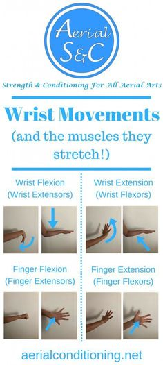 Before performing wrist stretches you must learn the movements at the wrist joint to receive the most out of your mobility training! Aerial Dance, Aerial Hoop, Aerial Arts, Aerial Silks, Finger Flexion, Wrist Stretches, Flexibility Training, Psoas Muscle, Sand Crafts