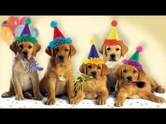 "Cute Dogs Bark the ""Happy Birthday"" Song - YouTube"
