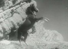 Champion the Wonder Horse - Saturday morning cinema viewing