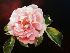 Pink Rose II, painting by artist Jacqueline Gnott