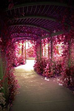 Pathway Through Pink Flowers.... could this be in my back yard please?? I want a flower garden...something like this.. I just wish flowers didnt attract bees :(