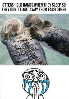Otters hold hands when they sleep so they dont float away from each other c-u-t-e