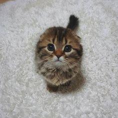 いいね!63.1千件、コメント364件 ― Daily Animal Postsさん(@animalzofig)のInstagramアカウント: 「Kitten ❤️」