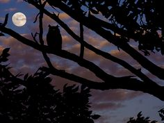 Owl_in_the_night_Tsahizn Tseh ƸӜƷ Goyakhala