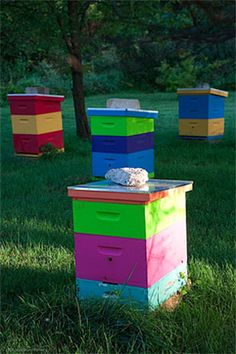 Wow! Colorful bee hives.  I like these color block supers/brood boxes, so you can intermix wildly.