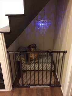 This kind of dog room kennel is absolutely a notable style procedure. This kind of dog room kennel is absolutely a notable style procedure. Under Stairs Dog House, Dog Nook, Dog Bedroom, Puppy Room, Dog Spaces, Animal Room, Dog Furniture, Pet Home, Dog Crate