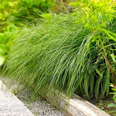 Use graceful arching grasses to soften and conceal hard or unsightly edges of beds and borders. Just about any cascading plant can do the trick and look lovely at the same time./