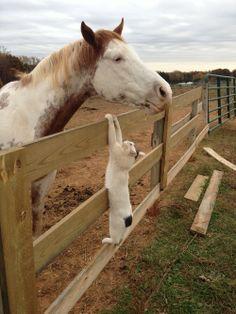 Kitty likes horse.