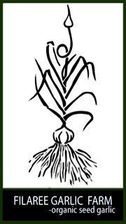 Filaree Garlic Farm ~ 182 Conconully Hwy,  Okanogan, WA 98840  Certified Organic by WSDA,  Phone: (509) 422 6940