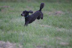 Cody running and loving it!