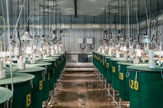 Images of 'superfish' genetic modification lab, by Alexi Hobbs