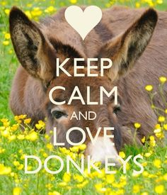 KEEP CALM AND LOVE DONKEYS - by me JMK More
