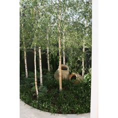 Front Yard Landscaping Mini Birch Grove by Robert Boyle Landscaping - Armadale Wonder where I can do something like this?