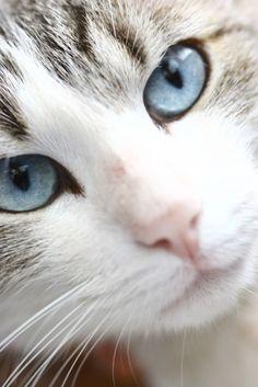 El Gato de ojos azules <3-.-