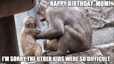 The simple act of sending funny happy birthday mom memes can bring a smile to a mother's face. Here are 101 happy birthday memes to help you get started. Happy Birthday Mom Meme, Happy Birthday Mom From Daughter, Happy Birthday In Heaven, Singing Happy Birthday, Mom Birthday, Funny Birthday, Funny Good Morning Messages, Funny Baby Bibs, Funny Christmas Pictures