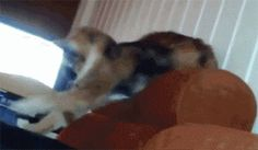 The greatest motivational cat GIF. | The 15 Most Delightful GIFs Of 2013
