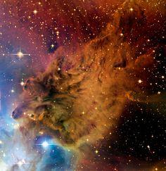 """La nebulosa """"Pelliccia di Volpe"""" (in inglese Fox Fur Nebula) è una singolare formazione di gas e polveri che si trova nella costellazione del Monoceros (Unicorno), situata poco più ad est di Orione. Si tratta, in realtà, di un piccolo dettaglio, all'interno della sezione di un complesso molto più grande, generalmente conosciuto come """"Gruppo dell'Albero di Natale"""" (NGC 2264), una nube di cui fa parte anche la famosa """"Nebulosa Cono"""". Foto: © Jean-Charles Cuillandre (CFHT) & Giovanni Anselmi…"""