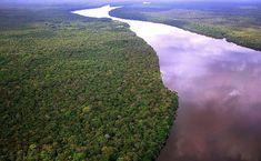 Vista aérea da floresta Amazônica na região do rio Negro (AM)