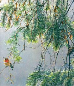 Maher Art Gallery: Robert Bateman paintings