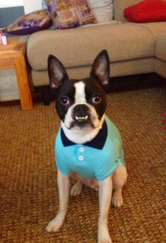 Gunnar from Seattle in his New Polo Shirt