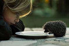 love hedgehogs.