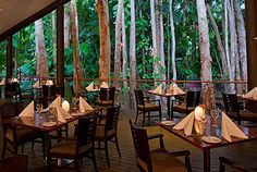 Restaurant at 5 star hotel: Kewarra Beach Resort and Spa. This hotel's address is: 78 Kewarra Street Kewarra Beach Cairns 4878 and have 44 rooms Australian Restaurant, Spa Offers, Best Places To Eat, Romantic Getaway, Cairns, Resort Spa, Beach Resorts, Restaurant Bar, The Good Place