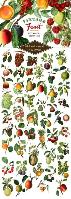 Vintage Fruit Botanical Graphics by Eclectic Anthology purchased on @creativemarket