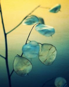 Little Light - Fine Art Photography by JMBarclay on Etsy