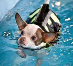 HandicappedPets.com is now proud to offer our Animal Rehab Services site. Find useful information for pet owners and rehab professionals alike, including rehab articles, references, products, and much more.