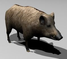 http://tf3dm.com/3d-model/boar-32845.html