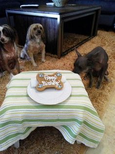 Barkley Bailey and Brody 7/15/15 Brodys 1st birthday
