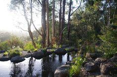 Native australian garden MUST LOOK AT IN MORE DETAIL,,,,,,,