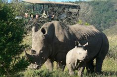 The recently refurbished Protea Hotel Kruger Gate leads the Fight Against Rhino Poaching. South Africa Honeymoon, Rhino Poaching, Honeymoon Getaways, Game Lodge, Hotel Branding, Honeymoon Packages, Under The Stars, Continents, Safari