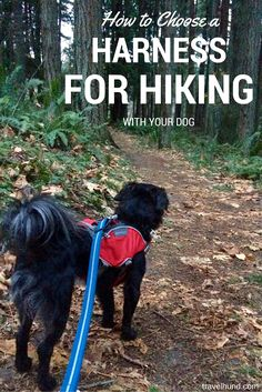 Need help choosing a harness for hiking with your dog? Check out this guide!