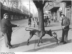 Nyt loppui koiran vetäminen – Koirakouluttajan viisi vinkkiä hihnakäytökseen  http://kuono.fi/nyt-loppui-koiran-vetaminen-koirakouluttajan-viisi-vinkkia-hihnakaytokseen/