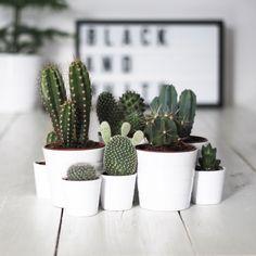 S\'entourer de belles plantes : les cactus - Frenchy Fancy