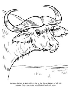 381185be19869 Image result for water buffalo clipart | big 5 | Animal coloring ...
