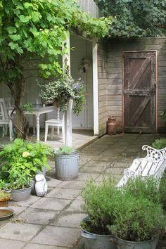 Wil ik ook graag proberen: een druif langs de veranda, alleen al voor de bladeren maar als er ook druiven aan komen is dat mooi meegenomen.....