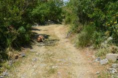 Sizilien mit Hund Wandern in Noto Antica 🐕 Stepping Stones, Country Roads, Outdoor Decor, Sicily, Hiking, Pet Dogs, Nature, Viajes, Stair Risers