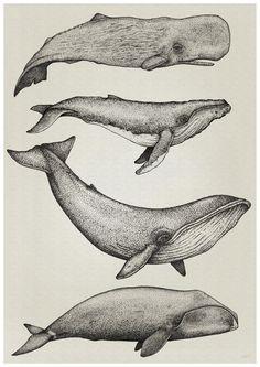 whale illustration - Google-Suche …