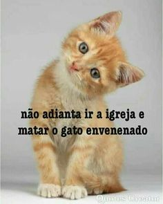 Visit our website for more pictures I Love Cats, Cute Cats, Animals And Pets, Cute Animals, Snoopy Love, My Animal, Mundo Animal, More Pictures, Pet Shop