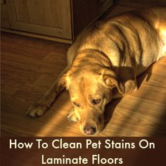 How to clean dog poop urine from a laminated floor for How to keep cat from pooping on floor