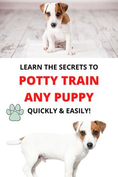Brain Training, Training Your Puppy, Potty Training, Dog Training Tips, Puppies For Sale, Cute Puppies, Dogs And Puppies, Beagle, Behavior Chart Toddler