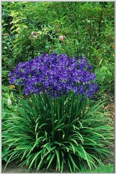 perennials that bloom all summer long | Blue Perennial Flowers That Bloom All Summer by cristina  #LandscapingGarden