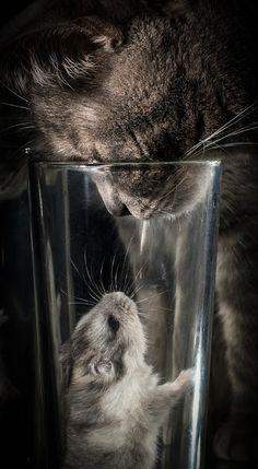 candymapi:   ❤ @mel-cat … happy weekend my dear Kitty TVB baci miaooo  ❤