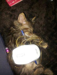Dur dur la rentrée chez les #chatons !