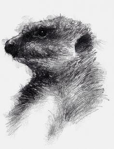 Artist Sean Briggs producing a sketch a day Meerkat mush  ##art#drawing#sketch ##meerkathttp://etsy.me/1rARc0J