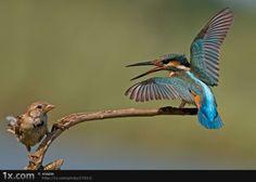 bird_photography_05