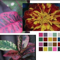 Creating a color palette for day two of with Palette, Create, Day, Color, Pallet, Colour, Colors